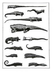 Reptiliae (lagarterum)