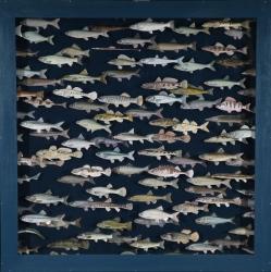 banco de peces 2