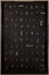Radiografía de insectos b