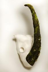 Cráneo de rinoceronte