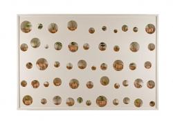 Desarrollo embrionario de semillas en úteros animales